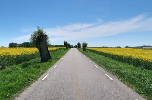 road, skane, sweden, rape fields, blue sky